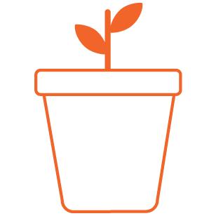 Orange Planting